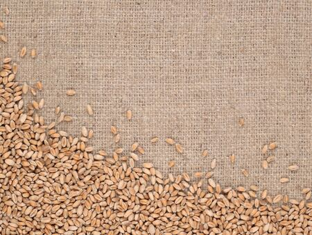sacking: Wheat grains in a sacking background