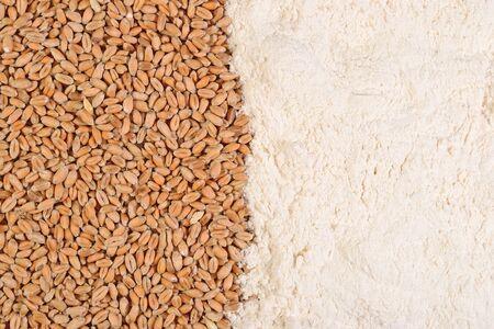 white flour: Wheat grains and white flour as background Stock Photo