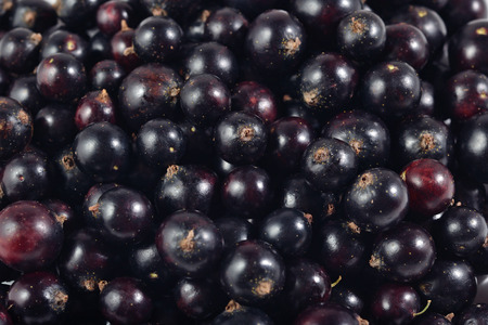 ribes: Fresh black currant close up as background texture
