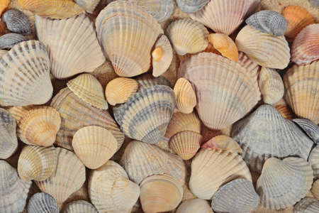 Seashells close-up as background texture