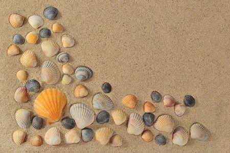 Seashells close-up on a sand background