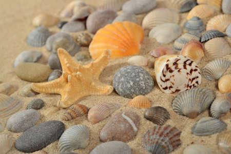Starfish, seashells and pebbles close-up Stock Photo