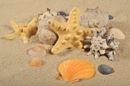 Starfishes and seashells close-up on a sand background