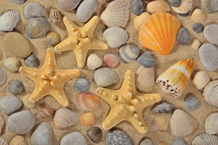 Starfishes, seashells and pebbles close-up