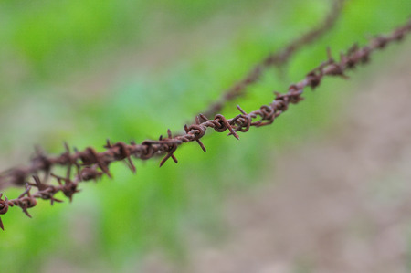 unfreedom: Rusty barbed wire on green background