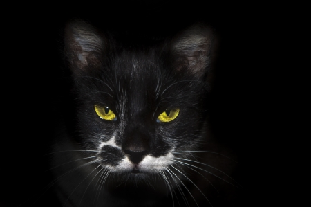 white moustache: Black cat of brilliant eyes i white moustache on black bottom Stock Photo