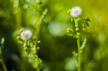 Bokeh with wild plants with much colorful almost totally defocused