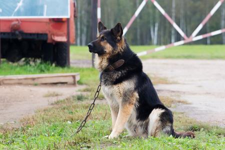 humilde: Perro grande en un objeto protector de la cadena Foto de archivo