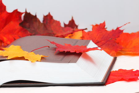 Open book with autumn maple leaves