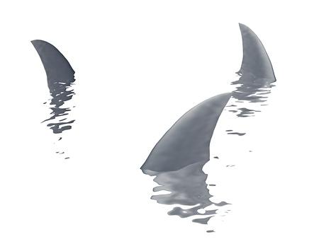 shark fin: three sharks fin  on a white background Stock Photo