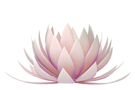 flor loto: flor de loto sobre un fondo blanco
