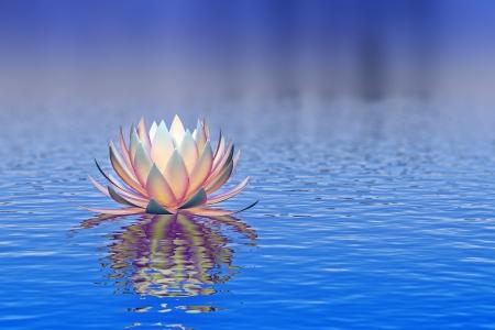 pink lily: lotus flower