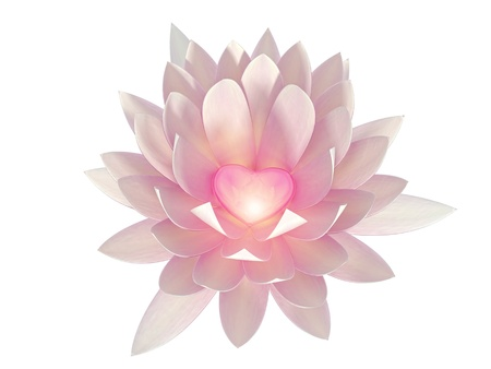 lotus flower on a white background Stock Photo