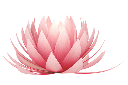 lotus flower on a white background photo