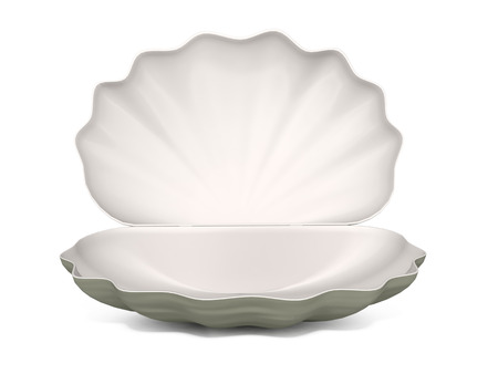 seashell on a white background Zdjęcie Seryjne