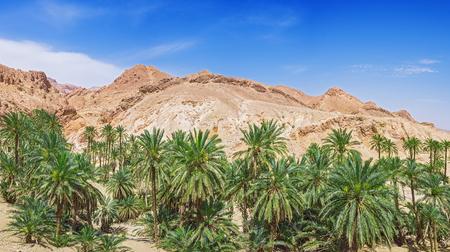 mountin: oasis