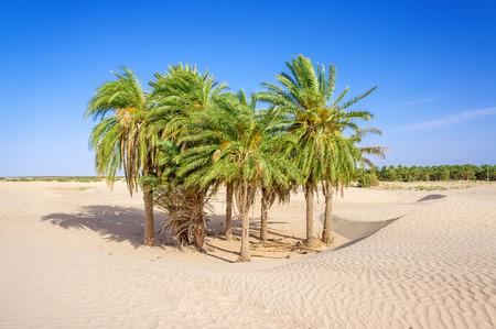 oasis: oasis
