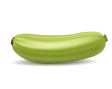 realistic 3d ripe young green zucchini on a white background made with a gradient mesh Ilustracja