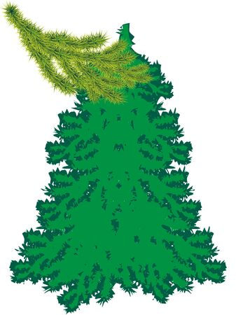 Branch spruce with young green shoots. Young fir-tree on a white background