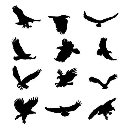 adler silhouette: Adler Silhouetten