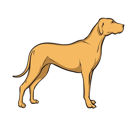 hounds: hunting dog  Illustration