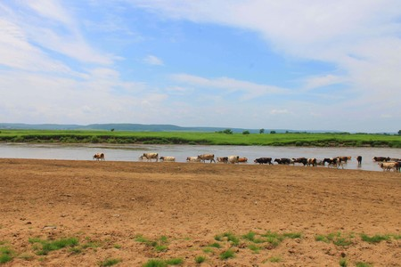 The photo depicts a herd of cows grazing.