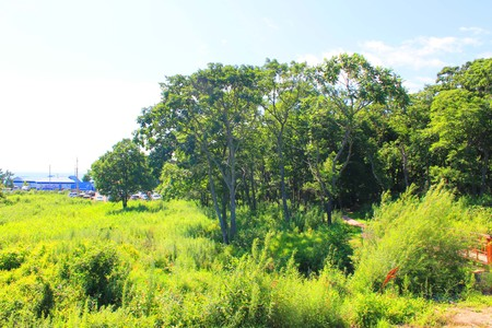Photo which shows a panorama of nature, forests and fields.