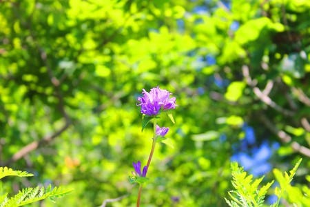 The photo depicts summer beautiful bright wildflowers.