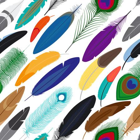 pluma blanca: Plumas de vectores de fondo sin fisuras. Modelo con las plumas de colores sobre fondo blanco
