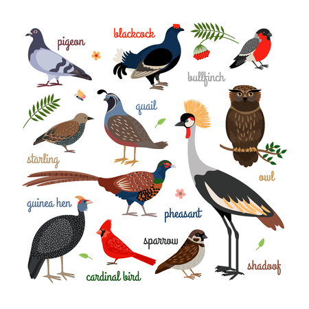 paloma caricatura: Iconos vectoriales de aves. Pájaros coloridos realistas. Búho y faisán, camachuelo y la grúa