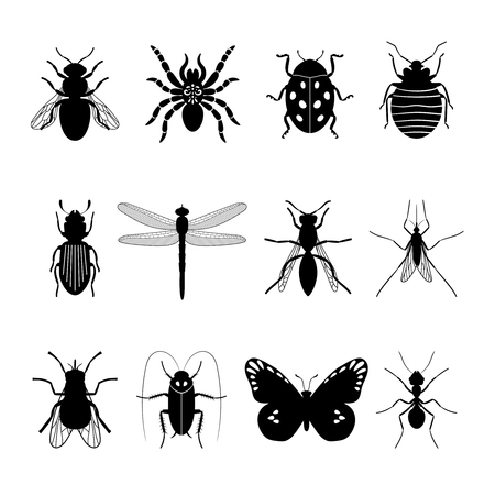 locust: Insects icons. Insect vector silhouettes on white background
