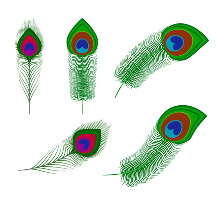 plume: Vector peacock plume feathers Isolated on white background