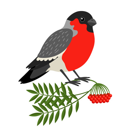 Bullfinch Christmas Bird. Vector Bullfinch on branch of mountain ash Illustration