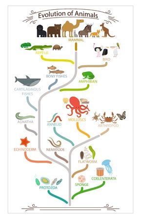 生物の進化動物方式です。学校教育ポスター。ベクトルの図。 写真素材 - 49571170