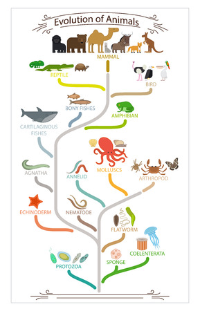 Biological evolution animals scheme. School education poster. Vector illustration.