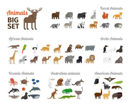 플랫 스타일의 큰 집합의 동물. 다른 대륙에서 숲의 동물과 동물. 벡터 일러스트 레이 션. 일러스트