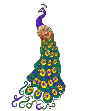 fashion illustration: Colorful Peacock illustration. Decorative peacocks tail on white background. Vector peacock icon Illustration