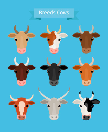 Cow heads vector set. Brown and black cow, red and white cows breeds