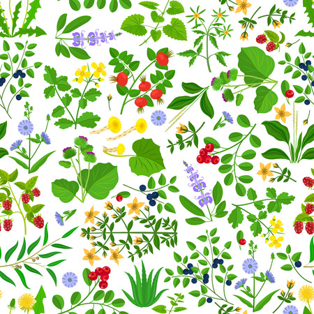 Wild herbs, flowers and berries seamless pattern. Hand drawn grass vector background