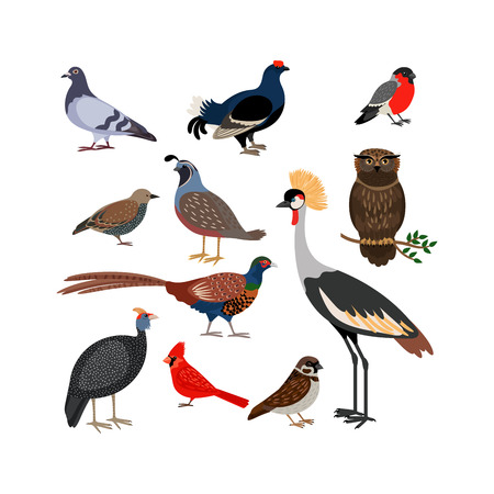 pheasant: Vector bird isolated icons. Owl and pheasant, bullfinch and crane Illustration