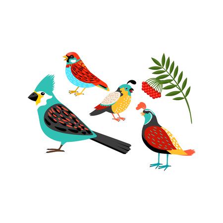 ornithological: Colorful biirds set isolated on white background. Vector illustration Illustration