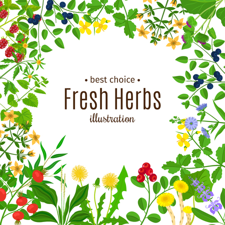 nettle: Medical herbs or botanical herb frame with text vector background Illustration