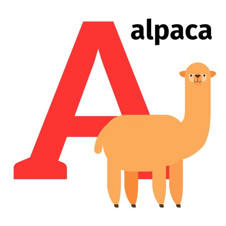 Alfabeto zoo degli animali inglese con lettera A. Illustrazione vettoriale Alpaca