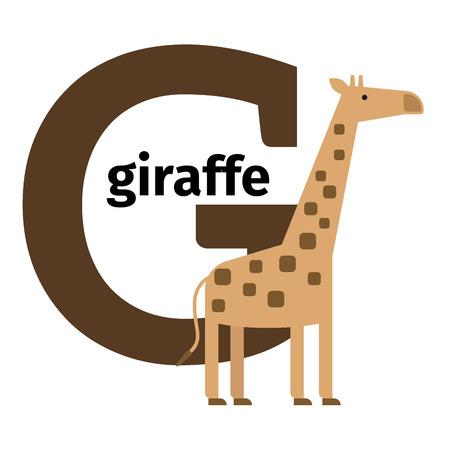 g giraffe: English animals zoo alphabet with letter G. Giraffe vector illustration Illustration