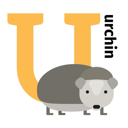 English animals zoo alphabet with letter U. Urchin vector illustration
