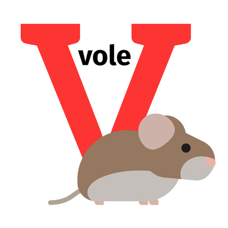 vole: English animals zoo alphabet with letter V. Vole vector illustration