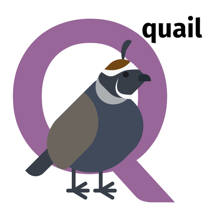 English animals zoo alphabet with letter Q. Quail vector illustration Illustration