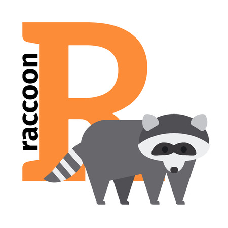 R: English animals zoo alphabet with letter R. Raccon vector illustration