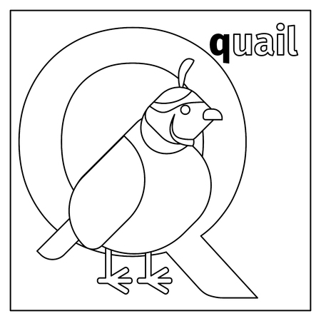 Coloring page or card for kids with English animals zoo alphabet. Quail, letter Q vector illustration