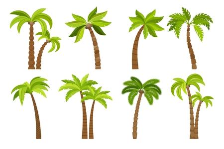Palme isolato su sfondo bianco. Bella illustrazione vettoriale set di albero di palma vectro